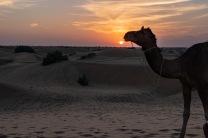 Desert Sunsets
